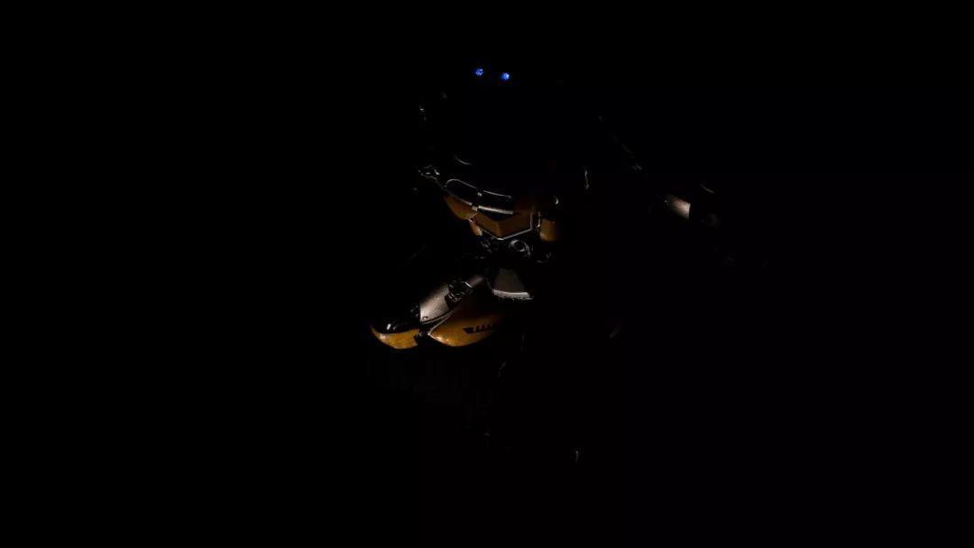 掌灯拍大黄蜂 静物摄影 布光教程 摄影课堂 018